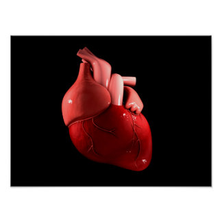 Conceptual Image Of Human Heart 2 Poster