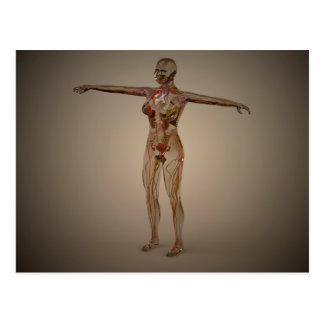 Conceptual Image Of Human Nervous System 2 Postcard
