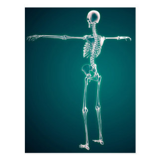 Conceptual Image Of Human Skeletal System Postcard