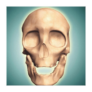 Conceptual Image Of Human Skull, Front View Canvas Print