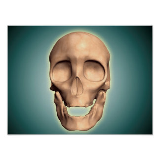 Conceptual Image Of Human Skull, Front View Poster