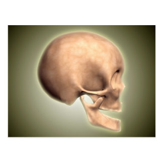 Conceptual Image Of Human Skull, Side View Postcard