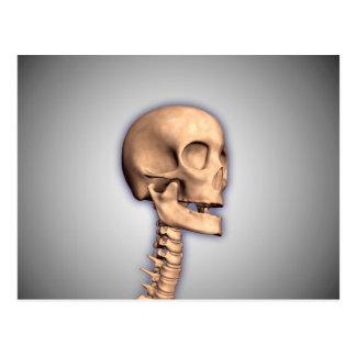 Conceptual Image Of Human Skull & Spinal Cord 2 Postcard