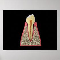 Conceptual Image Of Human Tooth 2