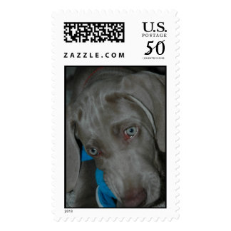 Concerned puppy postage