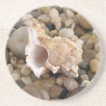 Conch and Pebbles Beverage Coaster