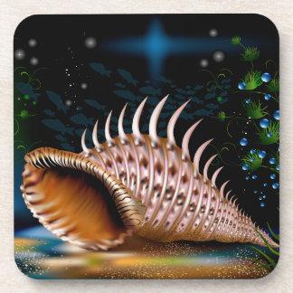 Conch Coaster
