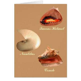 Conch Nautilus Queens Helmet Greeting Card
