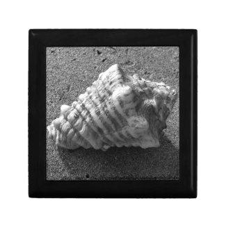 Conch Sea Shell B&W Photo Gift Jewelry Box