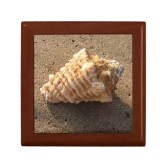 Conch Sea Shell Beach Photo Gift Jewelry Box