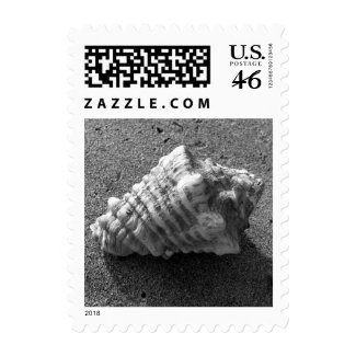 Conch Sea Shell Beach Photo Postage Stamp
