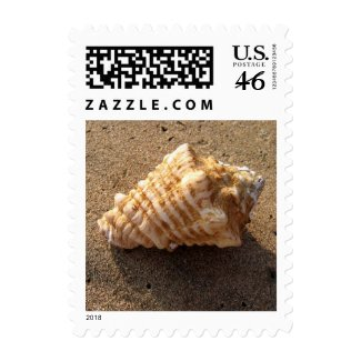 Conch Sea Shell Sand Beach Photo Postage Stamps