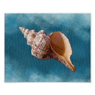 Conch Seashell Print