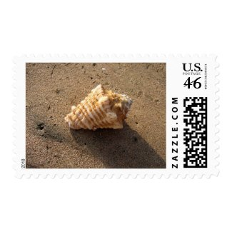 Conch seashell Sand Beach Photo Postage Stamps