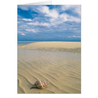 Conch Shell | Bahamas Card