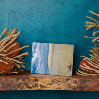Conch Shell | Bahamas Plaque