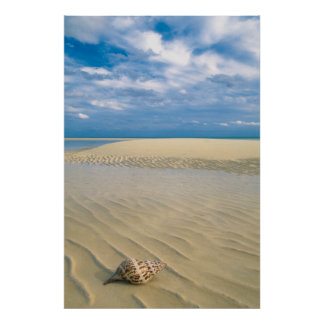 Conch Shell | Bahamas Poster
