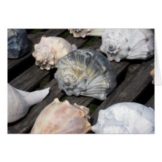 Conch Shell Birthday Card w Bible Verse
