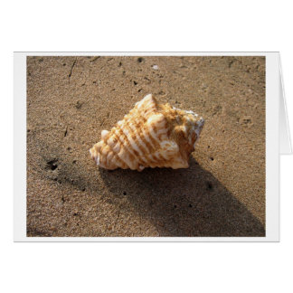 Conch Shell (Color) Card