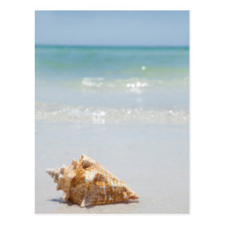 Conch Shell On Beach | Florida, St. Petersburg Postcard