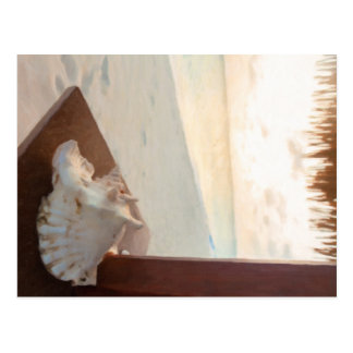 Conch Shell on Low Bay Beach Postcard