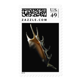 Conch shell postage stamps