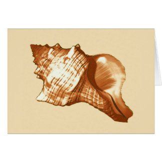 Conch shell sketch - brown, white and tan card