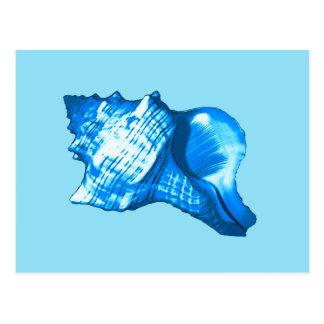 Conch shell sketch - cobalt and sky blue postcard