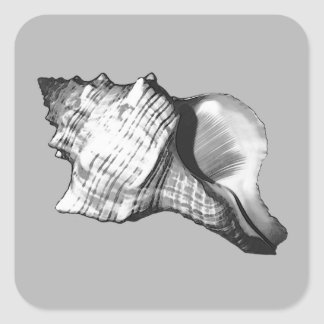 Conch shell sketch - shades of grey and white square sticker