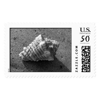 Conch Shell Stamp (Black and White)