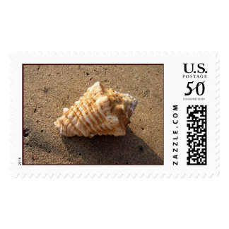 Conch Shell Stamp (Color)