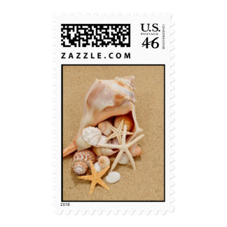 Conch Shell with Shells and Starfish Postage