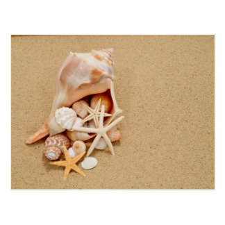 Conch Shell with Shells and Starfish Postcard