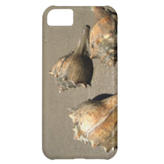 Conch shells iPhone 5C covers