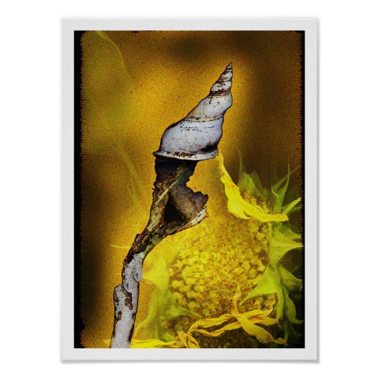Conch with Sunflower Poster