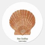 Concha de peregrino Shell de bahía Etiquetas