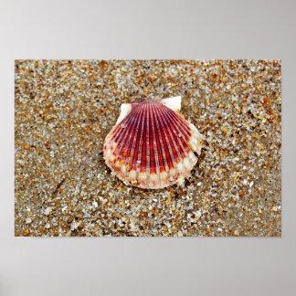 Concha de peregrino Shell Posters