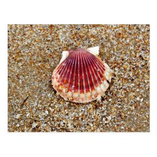 Concha de peregrino Shell - postal