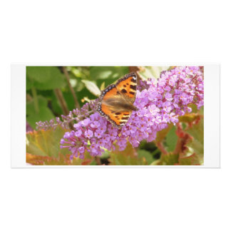 Concha, mariposa tarjetas fotográficas