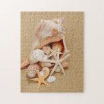 Concha Shell con las cáscaras y las estrellas de m Rompecabezas Con Fotos