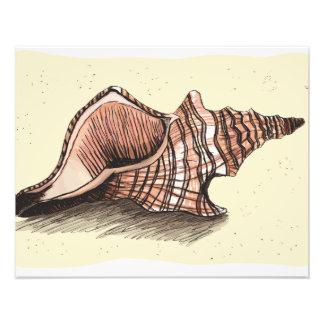 Concha Shell Arte Con Fotos