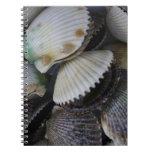 Conchas de peregrino libreta espiral
