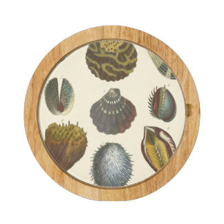 Conchology Collection Cheese Platter