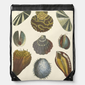 Conchology Collection Drawstring Bag