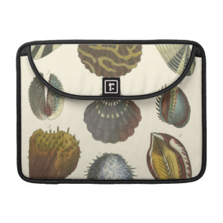 Conchology Collection MacBook Pro Sleeve