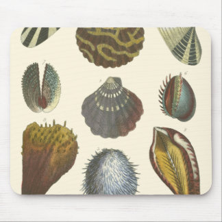 Conchology Collection Mouse Pad