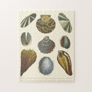 Conchology Collection Jigsaw Puzzles