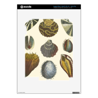 Conchology Collection Skin For iPad 3