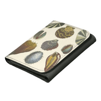 Conchology Collection Wallet
