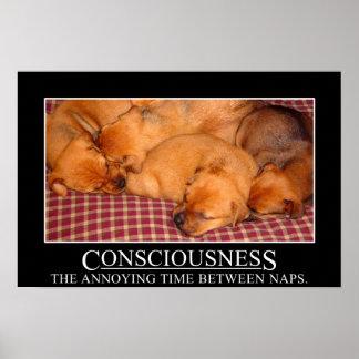 Conciencia: el tiempo molesto entre las siestas (l póster